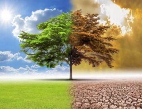 UNO STRANO CLIMA