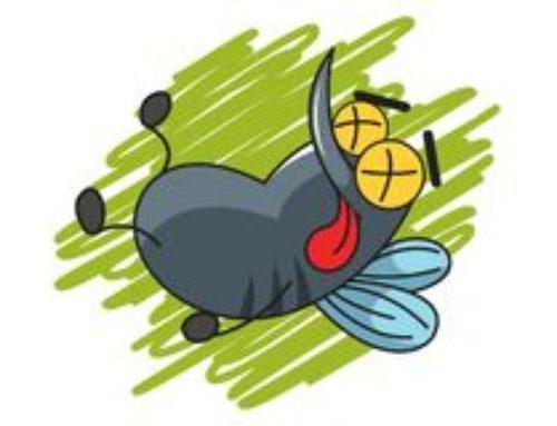 Come si fa con le zanzare d'estate