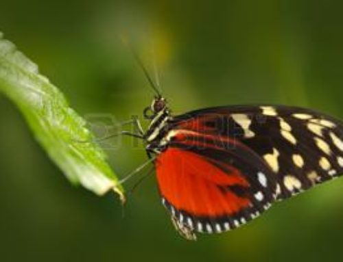 Fiori in 3D per salvare gli insetti di Lidia Garofalo