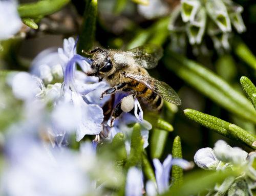 Senza le api che mondo sarebbe?