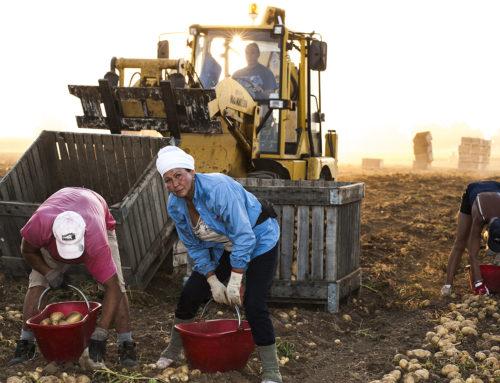 All'alba per fotografare i lavoratori della terra