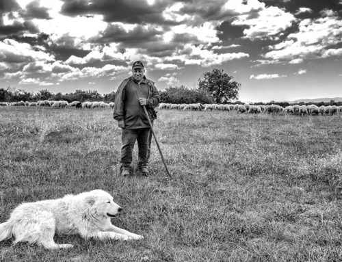 L'incontro con il pastore e il suo fidato cane