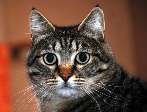 Un bel muso di gatto merita una foto