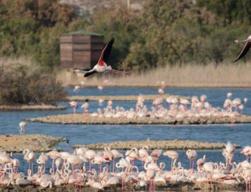 I fenicotteri colorano di rosa la Sicilia