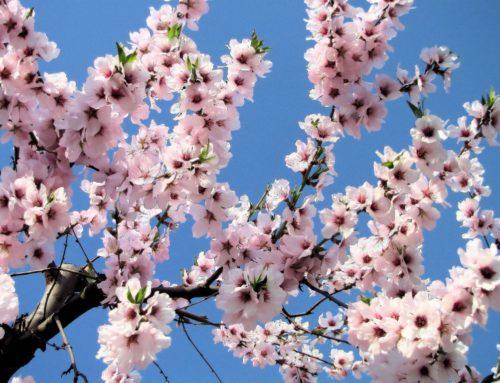 """""""Miennula"""", un frutto colmo di significato"""