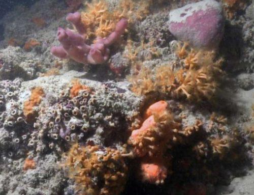 Una barriera corallina al largo della Puglia