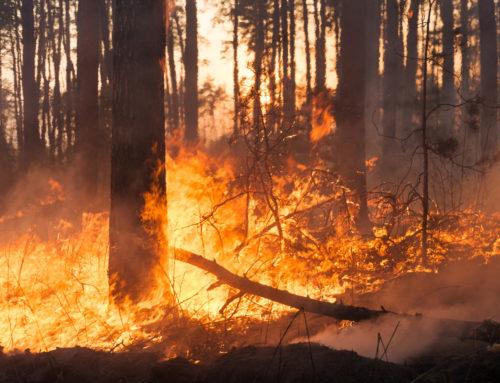 Crisi climatica, oltre le buone intenzioni
