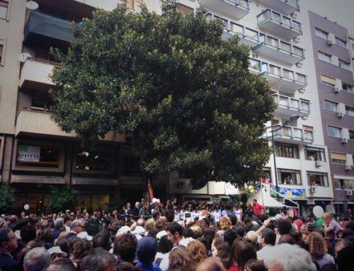 A Palermo alberi illustri e un ficus antimafia