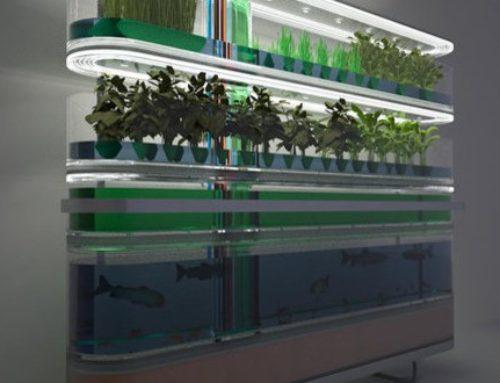 Acquaponica, come coltivare senza chimica