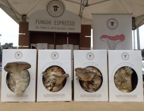 Dai fondi del caffè crescono funghi…