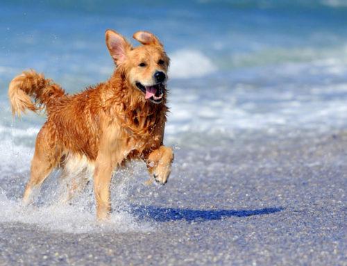 Cani in spiaggia, troppi divieti fuorilegge