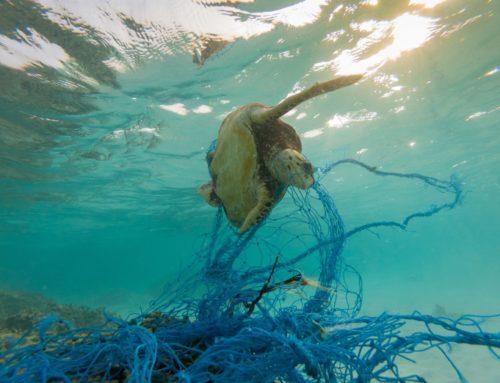 Sei mesi per ridare vita all'alto mar Tirreno