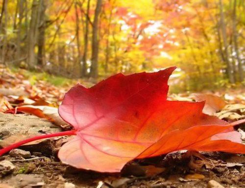 L'autunno è davvero una stagione triste?