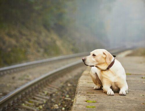 Abbandono dei cani, barbarie da combattere