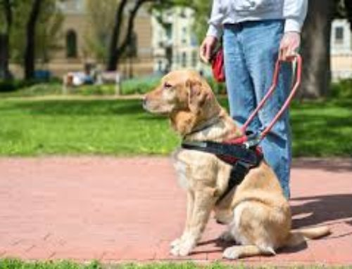 Brexit, porte chiuse anche per i cani-guida