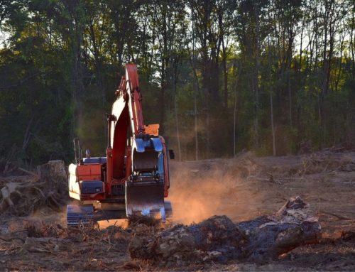 Una petizione per proteggere le foreste