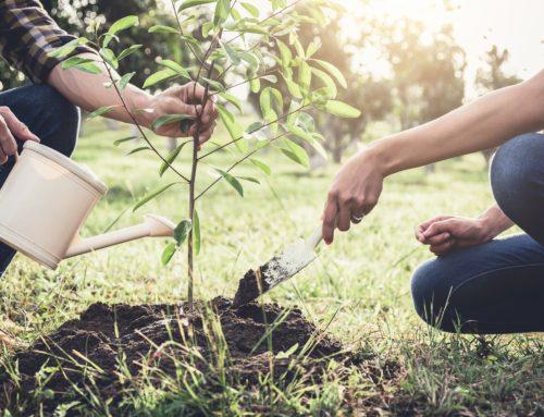 Adottiamo un albero per aiutare il pianeta e noi stessi