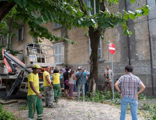 """Taglio alberi in città: """"Attentato alla salute"""""""