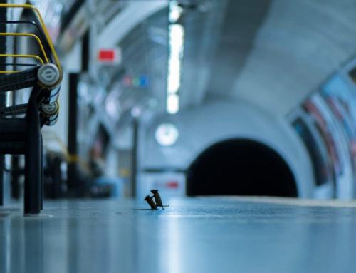 Nella metro lite tra topi, foto da record