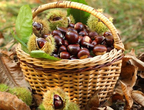 Una filiera organizzata per nocciole e castagne