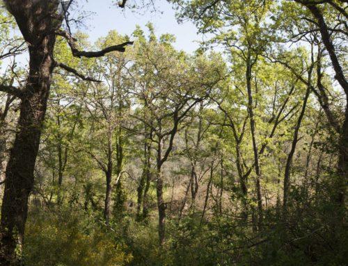 Un Fondo per salvare i boschi dal taglio