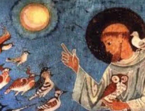 San Francesco dalla Spogliazione al rapporto con la Natura