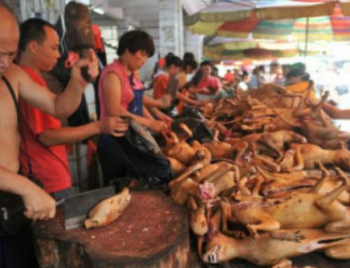 L'orrore del Festival della carne di cane