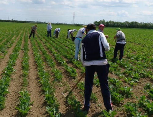 Sicilia, c'è tanto lavoro nel settore agricolo