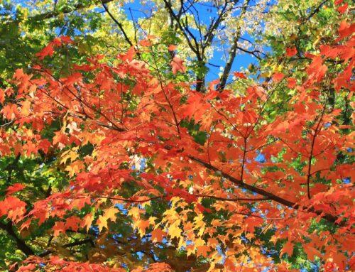 Autunno, la stagione dai colori meravigliosi