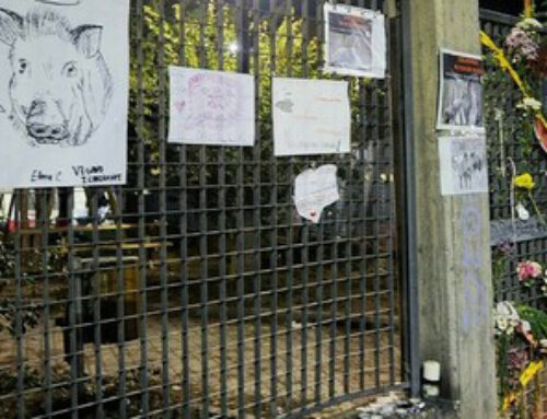 Rivolta per i cinghiali uccisi nel parco a Roma
