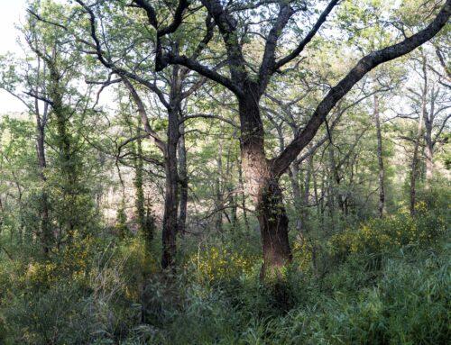 Ecco i tre falsi miti sulle foreste italiane