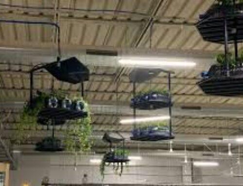 Sentinelle verdi a tutela delle fabbriche