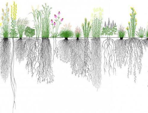 Le piante: tutte per una, una per tutte
