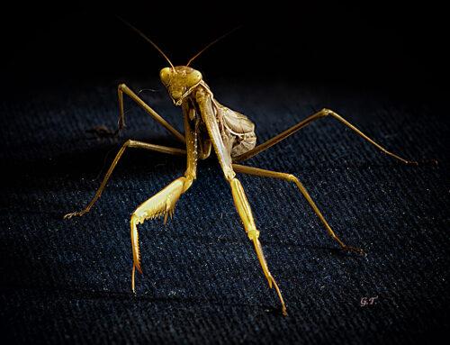 Il mondo degli insetti tutto da scoprire