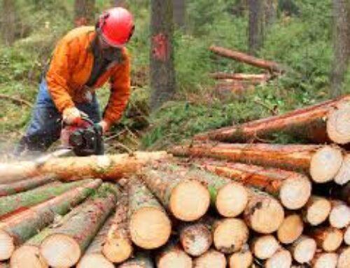 Fa male al pianeta bruciare le foreste