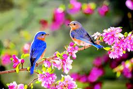 La primavera: raccolta di poesie della 1^G
