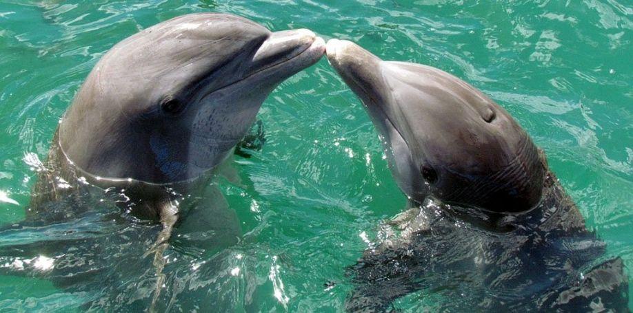 Il delfino innamorato che salvò la compagna