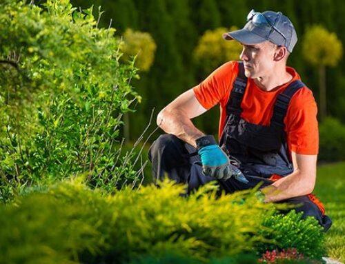 Manutentore del verde, professione del futuro