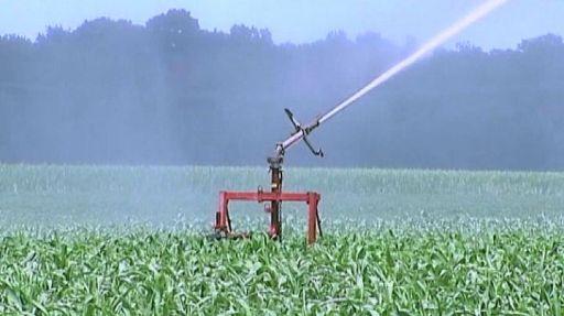 """""""Water to Food"""", quanta acqua serve per produrre cibo?"""