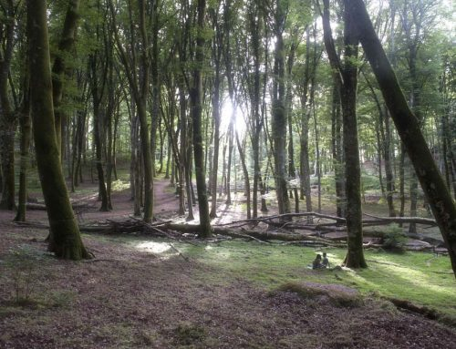 Storia, mito e misteri dell'antica Selva Cimina