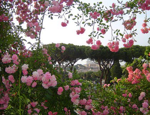 Romantica passeggiata nel roseto di Roma