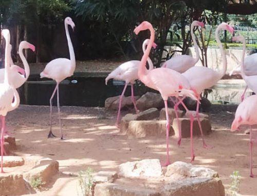 A Palermo riapre il Parco d'Orleans
