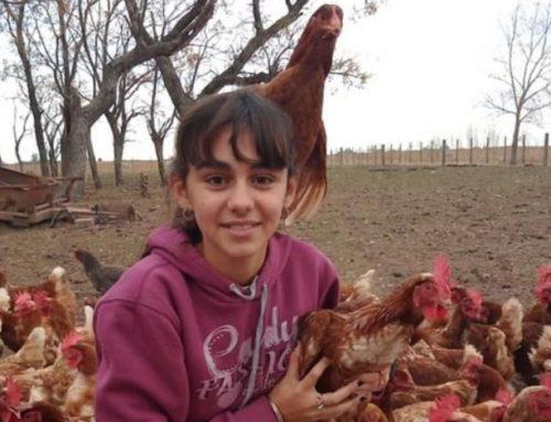Quattordicenne alleva galline e vende uova