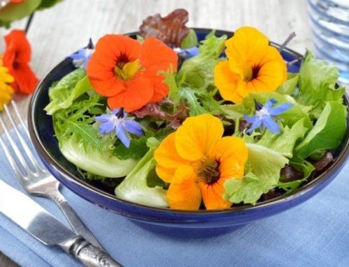 Fiori, belli e colorati ma anche da mangiare
