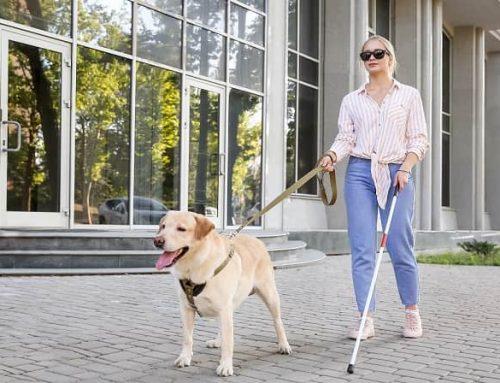 """Cane guida, e il cieco può tornare a """"vedere"""""""